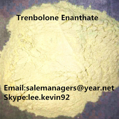 China GMP Trenbolone Powder Cas 10161-33-8 Trenbolone Enanthate For Injections supplier
