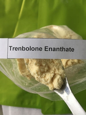 China Pharma Grade Trenbolone Powder Cas 10161-33-8 Trenbolone Enanthate Injection distributor